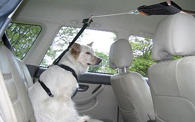 Dog Car Restraint Harness Yenra