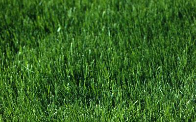 Lawn Mower Repair HQ - Free Guides, Tips, Videos on Lawn Mowers